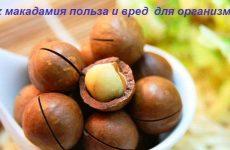 Орех макадамия: польза и вред для мужчин, женщин, отзывы