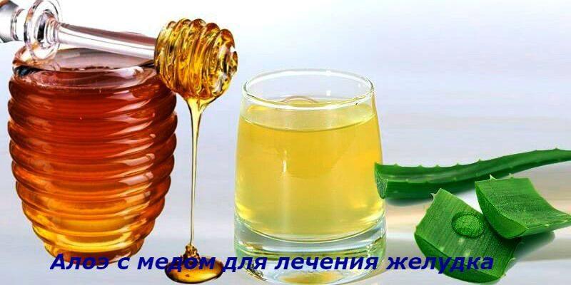 Алоэ с медом: лучшие рецепты для лечения желудка