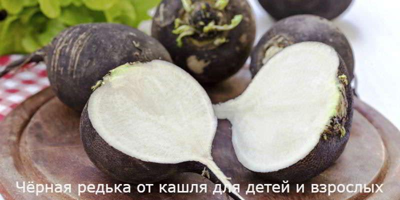 Черная редька от кашля: рецепты для взрослых и детей