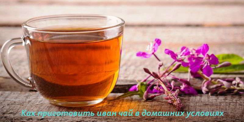 Иван-чай: как правильно готовить в домашних условиях
